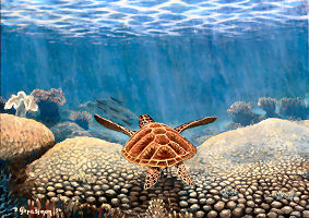 Seaturtle  Corals BArrier Reef