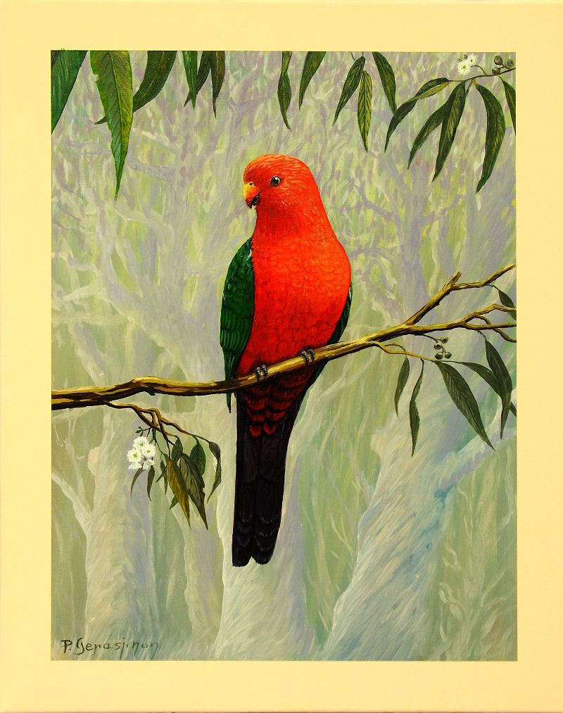 King Parrot Male Painting